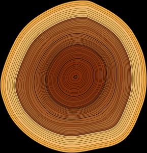 annual-rings-147508_960_7201-289x300